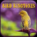Best Bird Songs Ringtones
