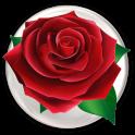 Special Rose Live Wallpaper