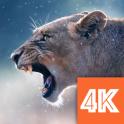 Animals Wallpapers 4K