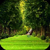 Живые обои падающие для андроид листья