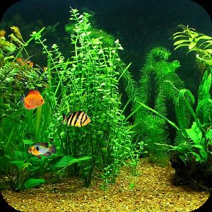 Fish tank hd live wallpaper android informer hd for Fish tank live wallpaper
