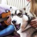Doggy Pet Go Virtual