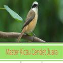 Master Kicau Cendet Juara