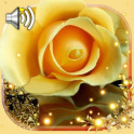 Roses Gallery Live Wallpaper