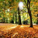 Осень жить обои