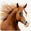 Horse Jumping Öffnen