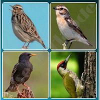 4 Songbird Quiz Games