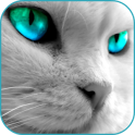 Handsome Cat HD Live Wallpaper