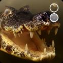Crocodile live wallpaper