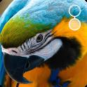 live parrot wallpaper