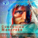 Mysterious Mandragora