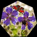 Purple Flowers Wallpaper Live