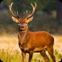 Deer Hunting Season Sniper Hunter 3D 2018