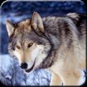 Night Wolf HD Wallpaper