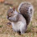 Squirrels Jigsaw Puzzles