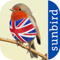 All Birds UK