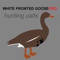 White Fronted Goose Calls - UK