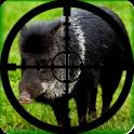 Wild Boar Hunting Calls
