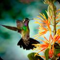 Free Live Bird Wallpaper