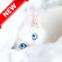 Kitten Wallpaper-HD