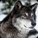 Free Nightwolf wallpaper