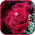 Rose Flower Wallpaper Live HD