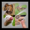 Scratch Animal Quiz