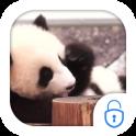 Cute Panda Locker Live Theme