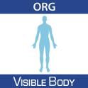 Anatomy & Physiology 16 (Org.)