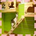 Cat House Designs