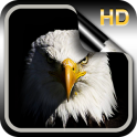 Eagle Live Wallpaper HD