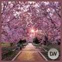 Cherry Blossom Gallery
