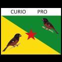 Cùrio pro Free