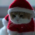 santa claus cat live wallpaper