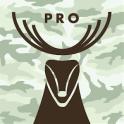 DipQuit Pro