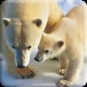 Polar Bears Live Video Wallpaper