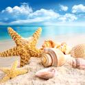 貝殻のライブ壁紙