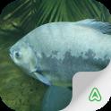 Fish Guide