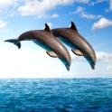 Delfine leben Tapeten