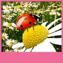 Ladybug Live Wallpapers