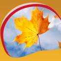 Autumn Leaves Live Wallpapers