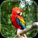 Papagei Live Hintergrund