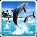 Dolphin HD Live Wallpaper