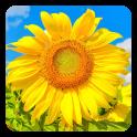 Goldenen Sonnenblumen LWP