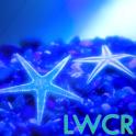 live wallpaper estrela do mar