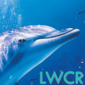 free dolphin live wallpaper