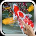 Interactive Koi Fish 3D
