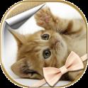 Fonds d'Écran de Chats