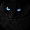 Black cats Live Wallpaper