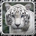 Tigre Blanc Fond d'écran Animé